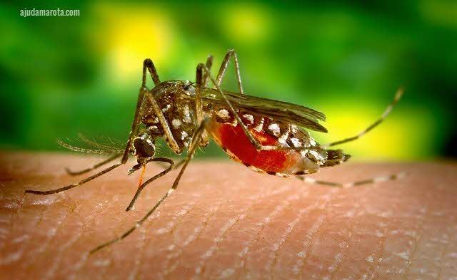 Chegou a época da dengue, agora a atenção tem que ser redobrada!
