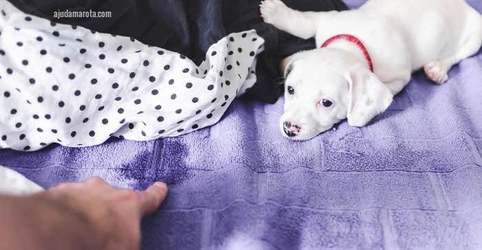Como remover urina de gato e cachorro do colchão
